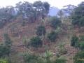 House near coffee plantation
